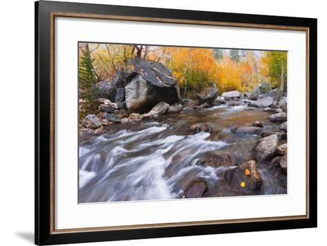 Fresh Snow on Aspens Along Bishop Creek, Inyo National Forest, California-Russ Bishop-Framed Art Print