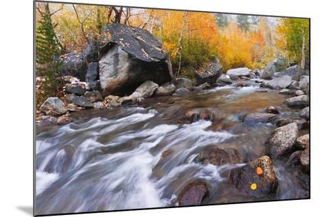 Fresh Snow on Aspens Along Bishop Creek, Inyo National Forest, California-Russ Bishop-Mounted Photographic Print