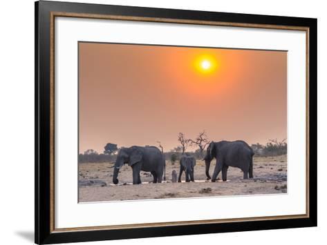 Botswana. Chobe National Park. Savuti. Harvey's Pan. Elephants Drinking at a Water Hole at Sunset-Inger Hogstrom-Framed Art Print