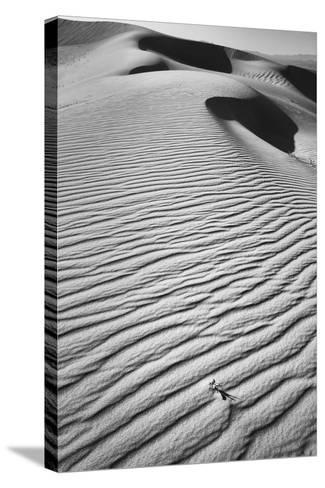 California, Mojave Trails National Monument-Judith Zimmerman-Stretched Canvas Print