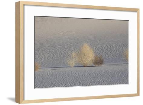 California. Death Valley National Park. Early Morning Light on Tumbleweeds in Eureka Sand Dunes-Judith Zimmerman-Framed Art Print
