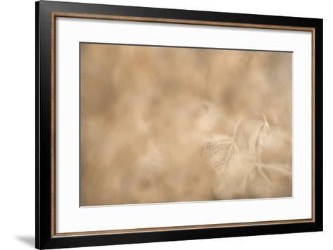 Maine, Harpswell. Hydrangea Abstract-Jaynes Gallery-Framed Art Print