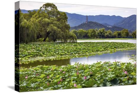Yue Feng Pagoda Pink Lotus Pads Garden Reflection Summer Palace, Beijing, China-William Perry-Stretched Canvas Print