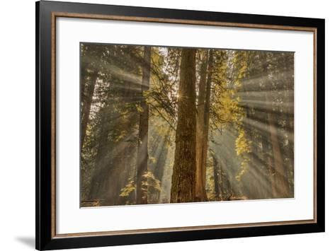Sun Rays Penetrate Forest Floor at Ross Creed Cedar Grove in Kootenai National Forest, Montana-Chuck Haney-Framed Art Print