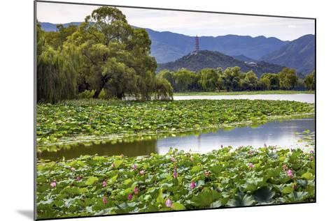 Yue Feng Pagoda Pink Lotus Pads Garden Reflection Summer Palace, Beijing, China-William Perry-Mounted Photographic Print