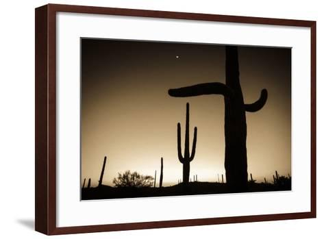Saguaro Cactus at Sunset, Organ Pipe Cactus National Monument, Usa-Russ Bishop-Framed Art Print