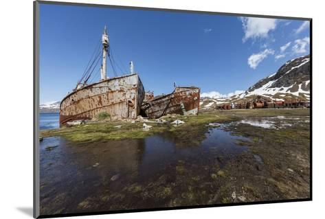 South Georgia Island, Grytviken. Abandoned Whaling Ships and Whaling Station Gather Rust-Jaynes Gallery-Mounted Photographic Print