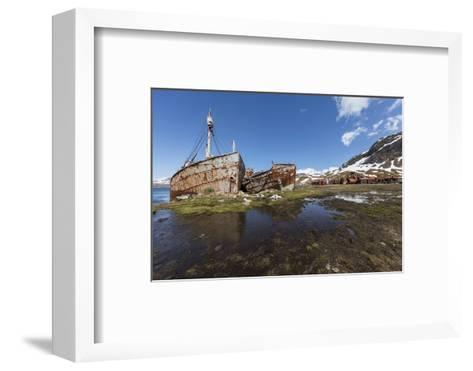 South Georgia Island, Grytviken. Abandoned Whaling Ships and Whaling Station Gather Rust-Jaynes Gallery-Framed Art Print