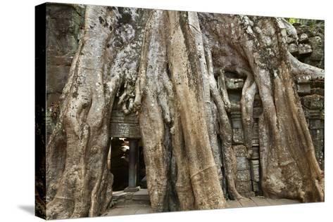 Tree Roots Growing over Ta Prohm Temple Ruins, Angkor World Heritage Site, Siem Reap, Cambodia-David Wall-Stretched Canvas Print