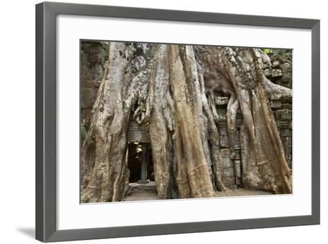 Tree Roots Growing over Ta Prohm Temple Ruins, Angkor World Heritage Site, Siem Reap, Cambodia-David Wall-Framed Art Print
