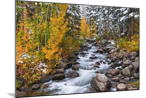 Fresh Snow on Aspens and Pines Along Bishop Creek, Inyo National Forest, California-Russ Bishop-Mounted Photographic Print