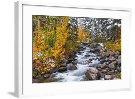 Fresh Snow on Aspens and Pines Along Bishop Creek, Inyo National Forest, California-Russ Bishop-Framed Art Print