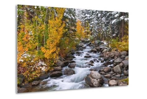Fresh Snow on Aspens and Pines Along Bishop Creek, Inyo National Forest, California-Russ Bishop-Metal Print