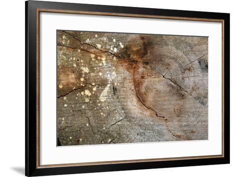 Canada, British Columbia, Cabbage Island. Cut Cedar Log Showing Age Rings-Kevin Oke-Framed Art Print