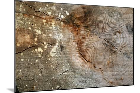 Canada, British Columbia, Cabbage Island. Cut Cedar Log Showing Age Rings-Kevin Oke-Mounted Photographic Print