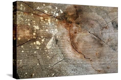 Canada, British Columbia, Cabbage Island. Cut Cedar Log Showing Age Rings-Kevin Oke-Stretched Canvas Print