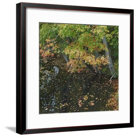 Fallen Leaves on Little Androscoggin River, New Hampshire, Usa-Tim Fitzharris-Framed Art Print