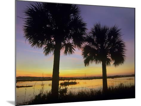 Sabal Palms at Saint Marks National Wildlife Refuge, Florida, Usa-Tim Fitzharris-Mounted Photographic Print