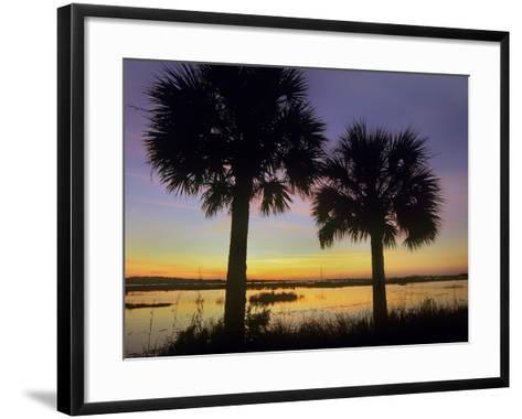 Sabal Palms at Saint Marks National Wildlife Refuge, Florida, Usa-Tim Fitzharris-Framed Art Print