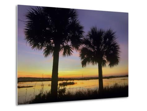 Sabal Palms at Saint Marks National Wildlife Refuge, Florida, Usa-Tim Fitzharris-Metal Print