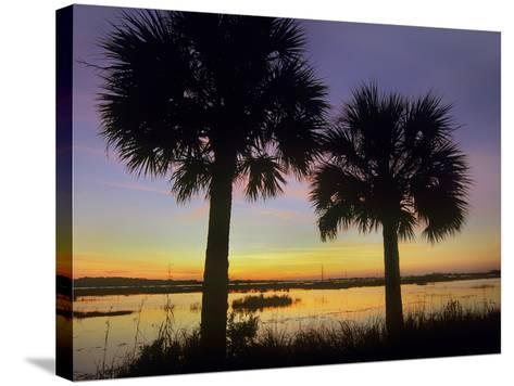 Sabal Palms at Saint Marks National Wildlife Refuge, Florida, Usa-Tim Fitzharris-Stretched Canvas Print