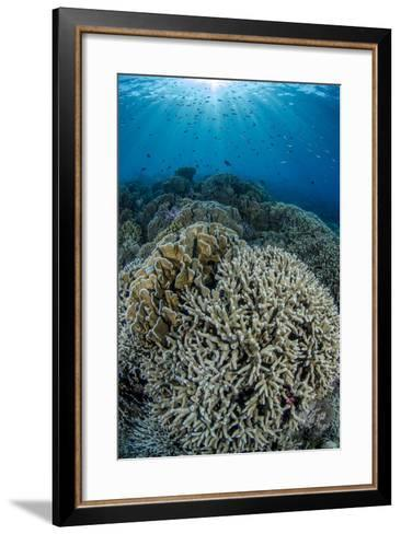 Indonesia, Forgotten Islands. Coral Reef Scenic-Jaynes Gallery-Framed Art Print