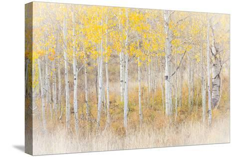 Utah, Manti-La Sal National Forest. Aspen Forest Scenic-Jaynes Gallery-Stretched Canvas Print