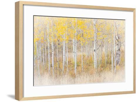 Utah, Manti-La Sal National Forest. Aspen Forest Scenic-Jaynes Gallery-Framed Art Print