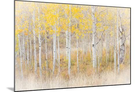 Utah, Manti-La Sal National Forest. Aspen Forest Scenic-Jaynes Gallery-Mounted Photographic Print