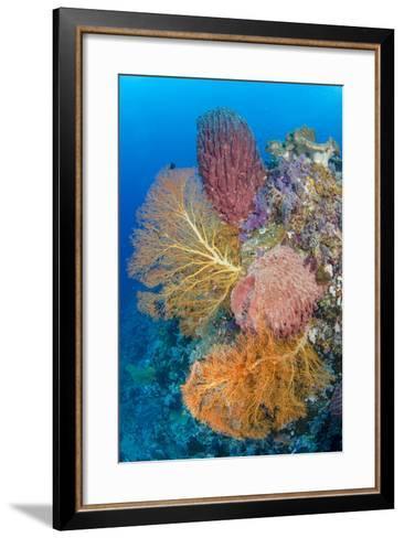 Indonesia, Forgotten Islands. Coral Reef Scenic-Jaynes Gallery-Framed Art Print