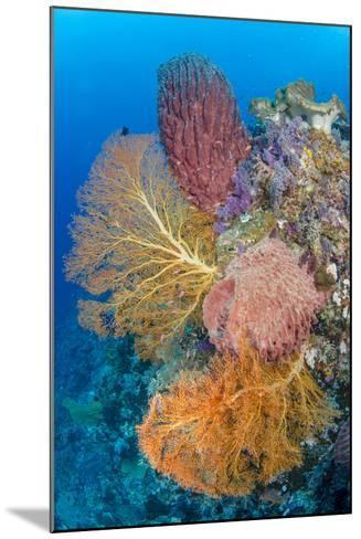 Indonesia, Forgotten Islands. Coral Reef Scenic-Jaynes Gallery-Mounted Photographic Print