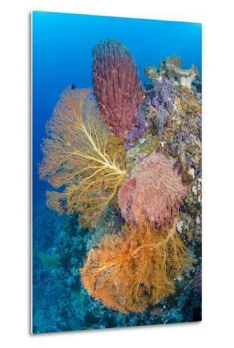 Indonesia, Forgotten Islands. Coral Reef Scenic-Jaynes Gallery-Metal Print