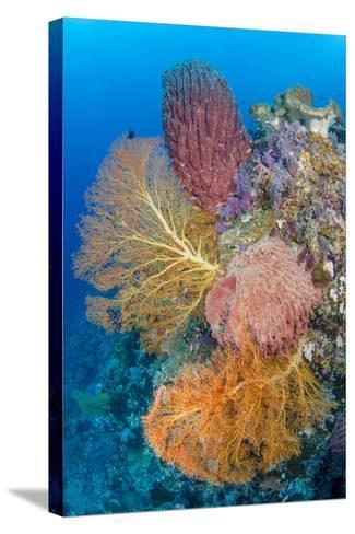 Indonesia, Forgotten Islands. Coral Reef Scenic-Jaynes Gallery-Stretched Canvas Print