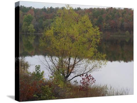 Cassatot Point, Gillham Lake, Arkansas, Usa-Tim Fitzharris-Stretched Canvas Print
