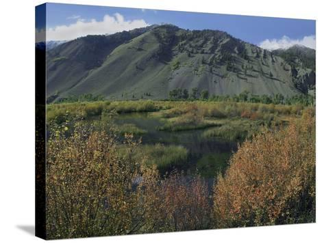Boulder Mountains and Trail Creek Beaver Pond in Autumn, Idaho, Usa-Tim Fitzharris-Stretched Canvas Print