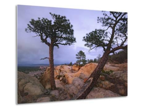 Storm over El Malpais National Monument, New Mexico, Usa-Tim Fitzharris-Metal Print