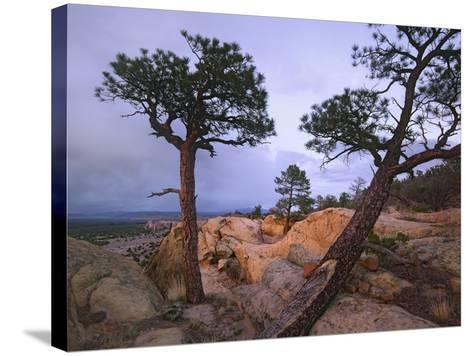 Storm over El Malpais National Monument, New Mexico, Usa-Tim Fitzharris-Stretched Canvas Print