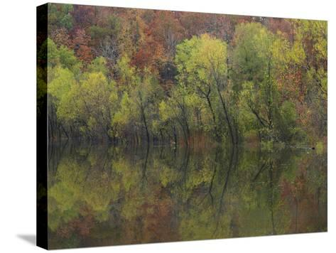 Autumn Foliage Along Gillham Lake, Arkansas, Usa-Tim Fitzharris-Stretched Canvas Print