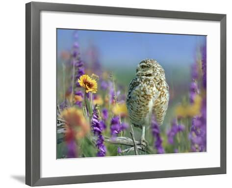 Burrowing Owl, New Mexico, Usa-Tim Fitzharris-Framed Art Print