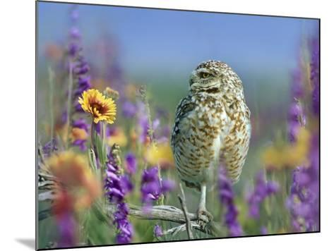 Burrowing Owl, New Mexico, Usa-Tim Fitzharris-Mounted Photographic Print