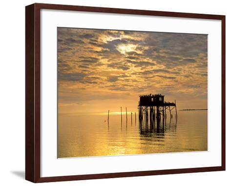 Sunset over Pelicans Perched on a Shack, Cedar Key, Florida, Usa-Tim Fitzharris-Framed Art Print