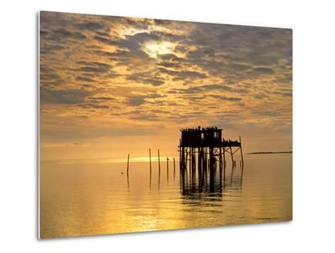 Sunset over Pelicans Perched on a Shack, Cedar Key, Florida, Usa-Tim Fitzharris-Metal Print