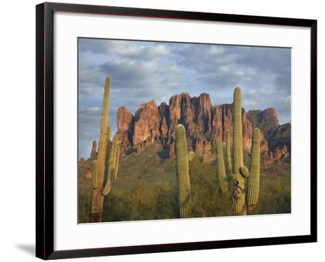 Saguaros and Superstition Mountains, Lost Dutchman State Park, Arizona, Usa-Tim Fitzharris-Framed Art Print