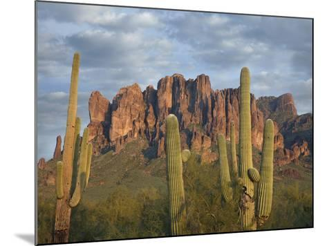 Saguaros and Superstition Mountains, Lost Dutchman State Park, Arizona, Usa-Tim Fitzharris-Mounted Photographic Print
