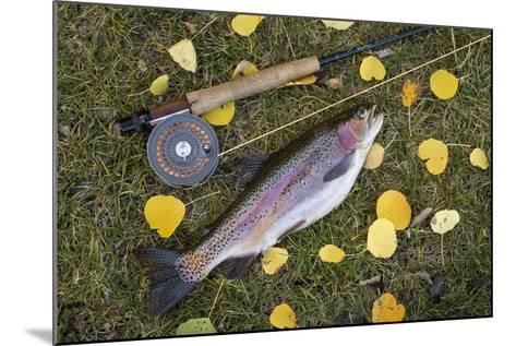 Utah, Fishlake National Forest. Rainbow Trout and Fly Rod-Jaynes Gallery-Mounted Photographic Print