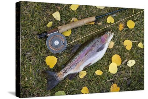 Utah, Fishlake National Forest. Rainbow Trout and Fly Rod-Jaynes Gallery-Stretched Canvas Print