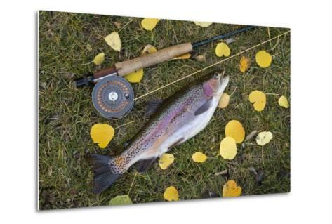 Utah, Fishlake National Forest. Rainbow Trout and Fly Rod-Jaynes Gallery-Metal Print