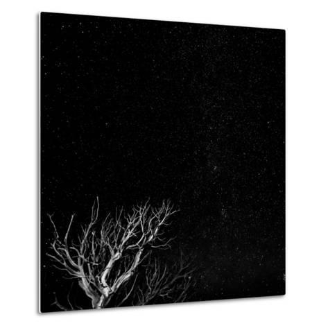 Utah, Capitol Reef National Park. Dead Tree and Night Sky-Jaynes Gallery-Metal Print