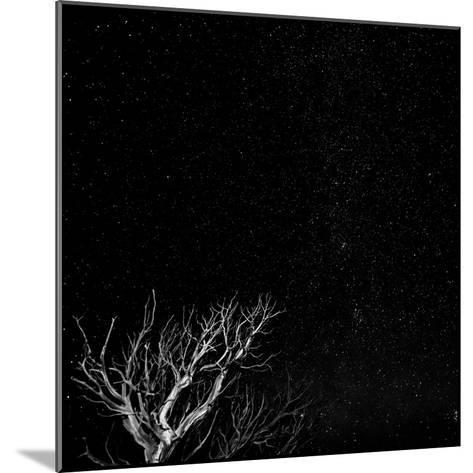 Utah, Capitol Reef National Park. Dead Tree and Night Sky-Jaynes Gallery-Mounted Photographic Print