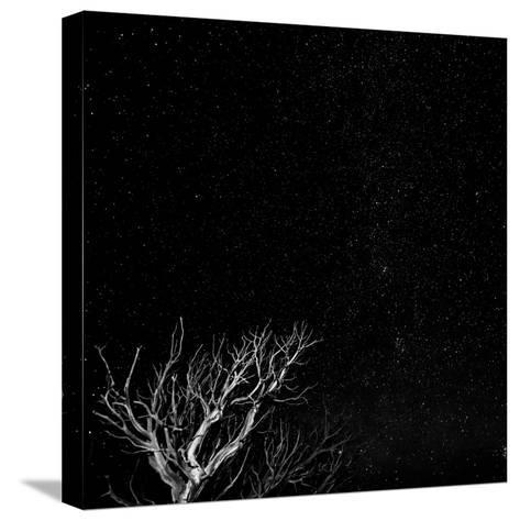 Utah, Capitol Reef National Park. Dead Tree and Night Sky-Jaynes Gallery-Stretched Canvas Print